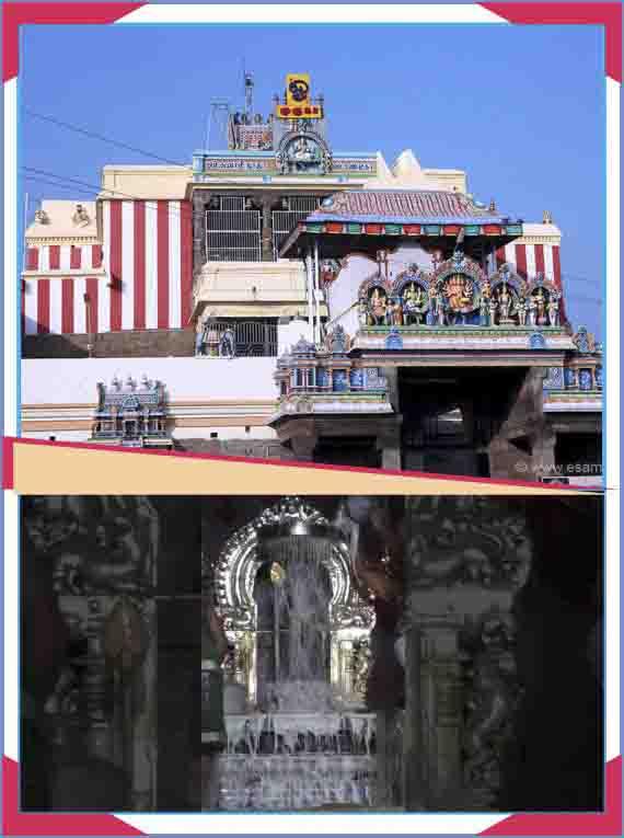 Swamimalai - Murugan Abishekam